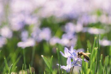 Puntura ape: infortunio sul lavoro?