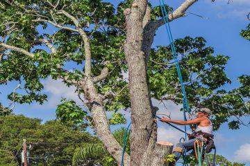 Se cade un albero di un privato: chi paga?