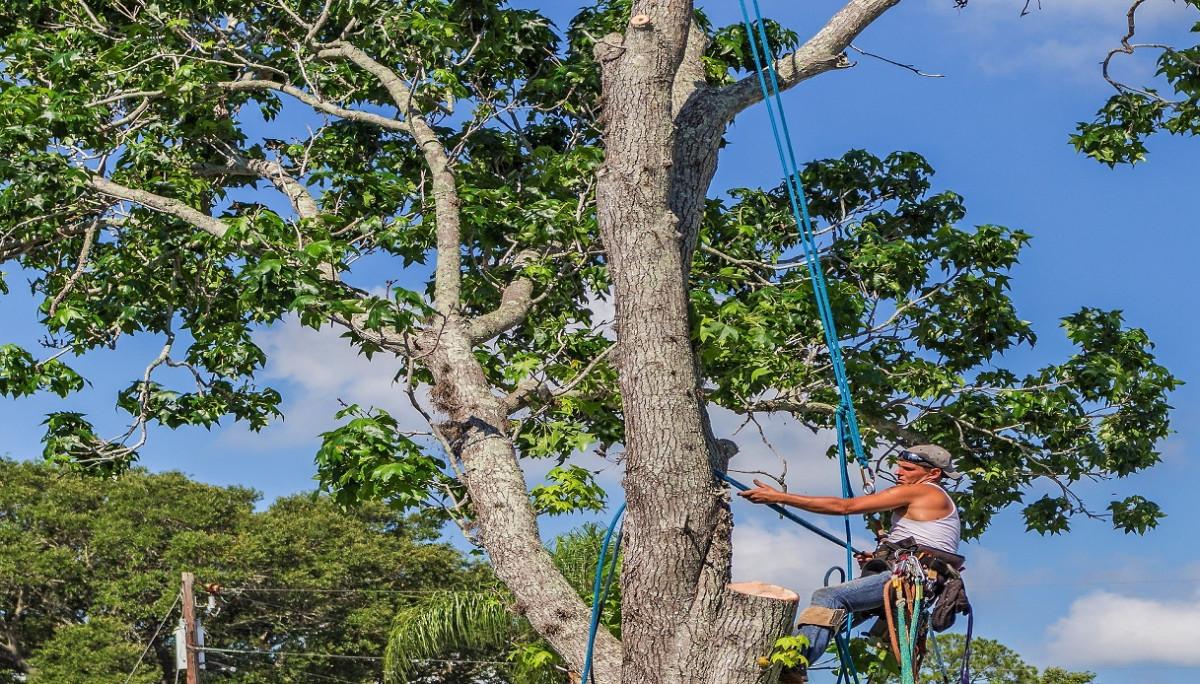 Il vicino può tagliare i rami del mio albero?
