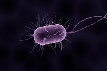 Microbiota intestinale e salute