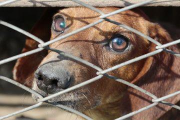 Sequestro amministrativo di cani