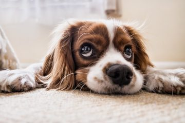 Anagrafe canina: cos'è e come funziona