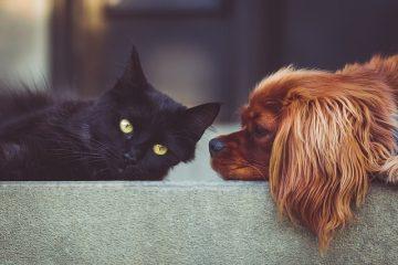 Gli animali in condominio