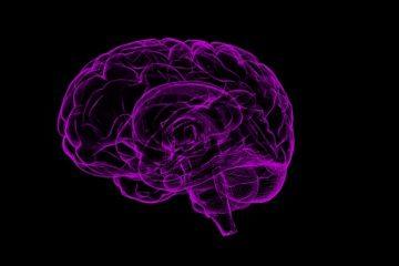 Memoria e meccanismi alla base del ricordo