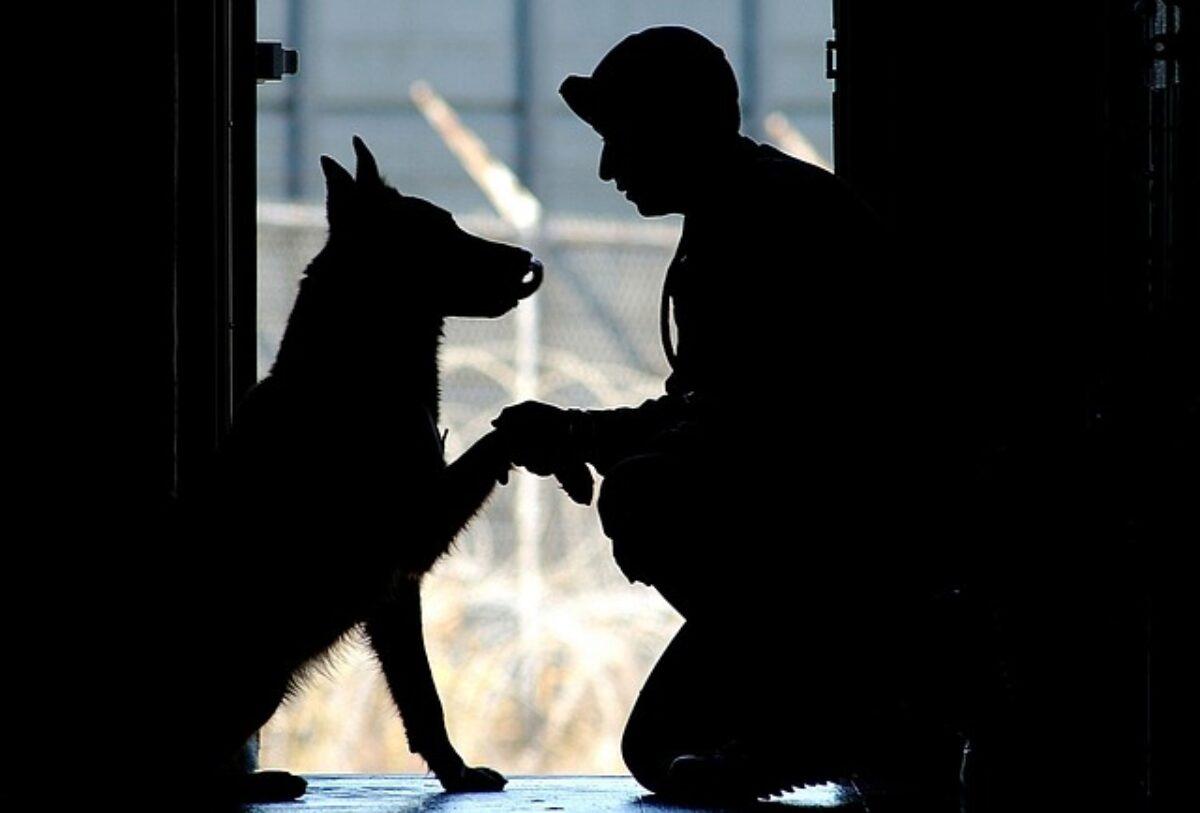 Orari In Cui Il Cane Può Abbaiare