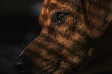 Animali maltrattati: che fare?