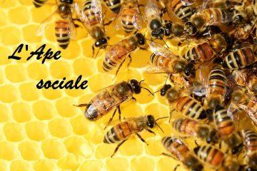 Ape sociale: proroga al 2019