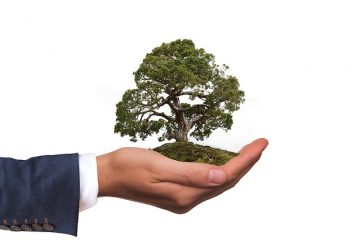Risarcimento del danno ambientale: ultime sentenze