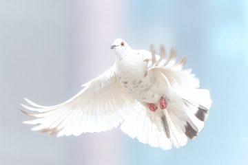 Pace fiscale e pace contributiva: nuova sanatoria