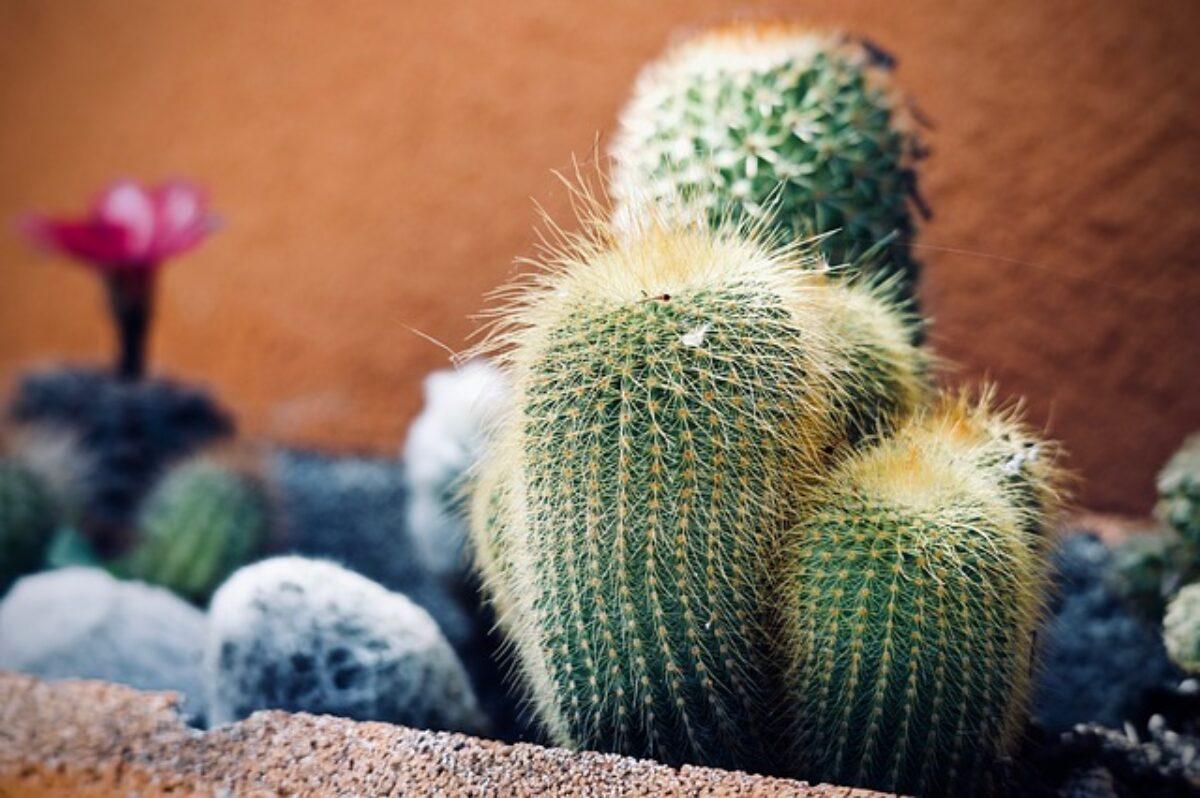 Come Far Morire Una Pianta piante grasse: come curare