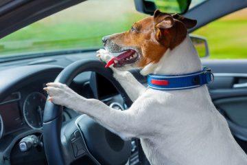 Ho investito un cane: l'assicurazione paga?