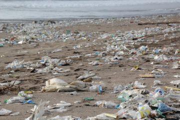 Tutela dell'ambiente: nasce la Carta di Napoli