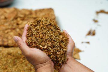 È legale coltivare tabacco?