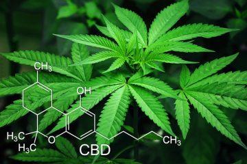 Cassazione: reato vendere cannabis nei growshop