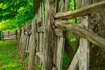 alberi alto fusto distanze legali