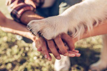 A chi va l'animale domestico dopo la separazione?