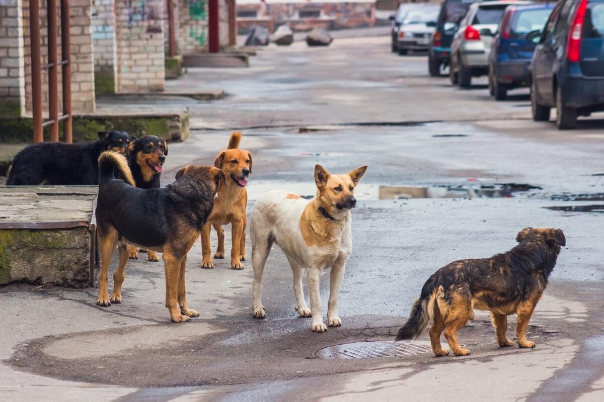 Risultato immagini per cani randagi