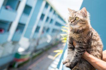 Animali in condominio: ultime sentenze