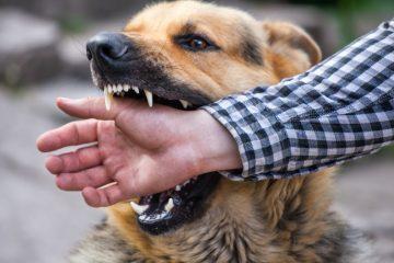 Morso di cane: cosa rischia il padrone