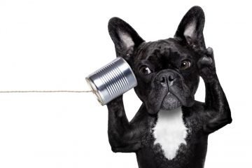 Microfoni sul posto di lavoro: legali?