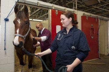 Asl veterinaria: può accedere in casa senza consenso?