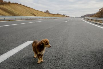 Animale autostrada: ultime sentenze