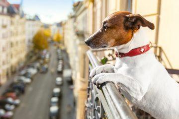 Cani sui balconi: cosa prevede la legge