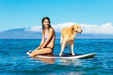 Il cane può scendere in spiaggia?