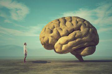 Perché il cervello umano è il più evoluto?