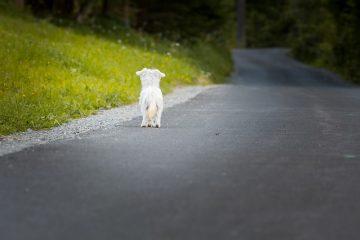 Abbandono di animali: ultime sentenze