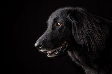Uccisione cane: ultime sentenze