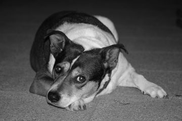 Maltrattamento di animali: ultime sentenze