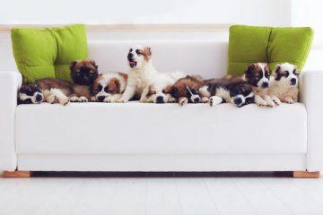 Quanti animali si possono tenere in appartamento?