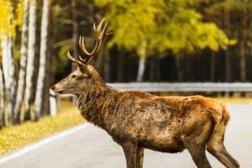 Risarcimento danni da fauna selvatica: ultime sentenze