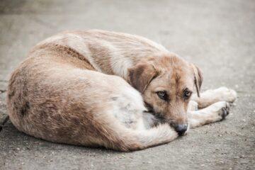 Abbandono di animali: statistiche