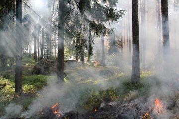 Bruciare sterpaglie: si rischia la denuncia per incendio doloso