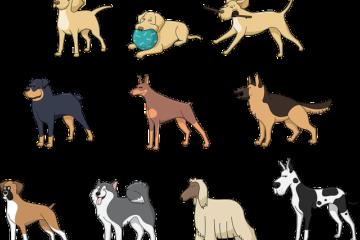 Legge sui cani pericolosi