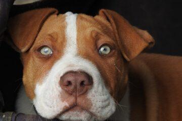 Quando un cane è pericoloso?