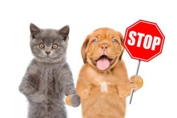 Delitti contro il sentimento per gli animali: ultime sentenze