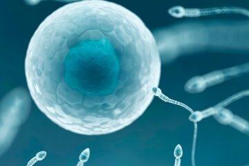 Fertilità: scoperte le cause della riduzione