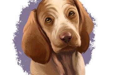 Cani, collare elettrico vietato: ecco che può succedere
