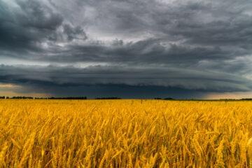 Coldiretti: coi nubifragi d'autunno colture a rischio