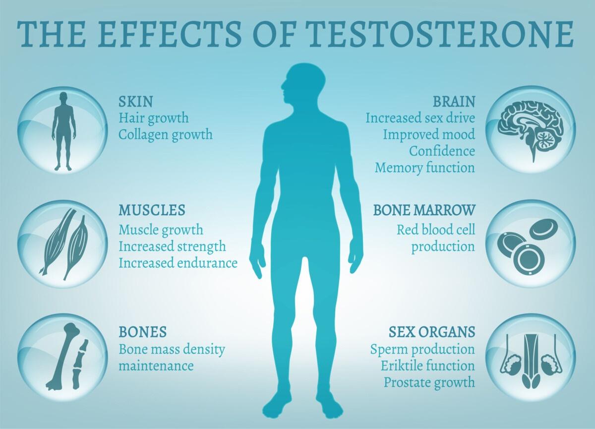 erezione e testosterone)