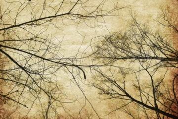 Taglio abusivo di alberi di proprietà privata