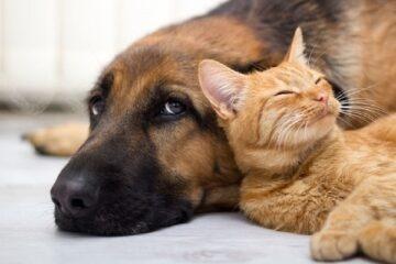 Tutela degli animali: ultime sentenze