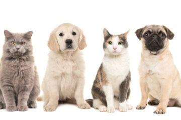 Cani e gatti: un'indagine rivela quanti ce ne sono