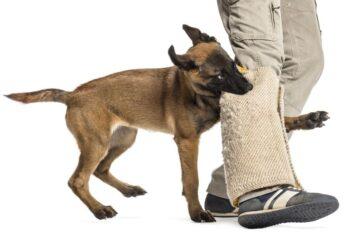 Morso del cane del vicino: come agire