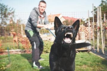 Cosa rischio se il mio cane morde una persona