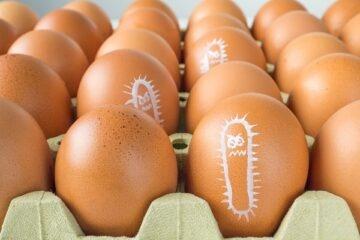 Salmonella: cos'è, come si prende e come prevenirla