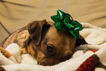 È legale vendere un cane?